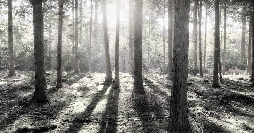 Toplu ağaçlandırma iklim krizi ile mücadelede yeterli değil