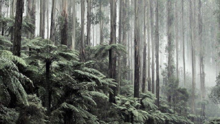Bilim insanları, orman yangınlarını önleyebilecek sprey geliştirdi