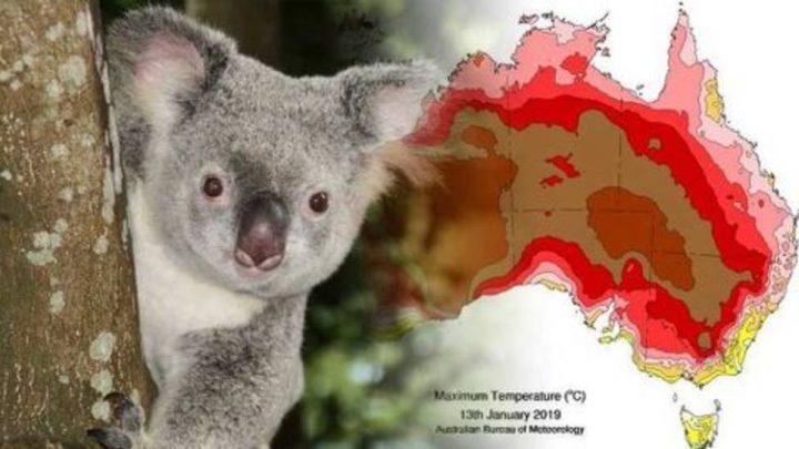 Avustralya yangınları sonrası 113 hayvan türü için 'acil yardım' çağrısı