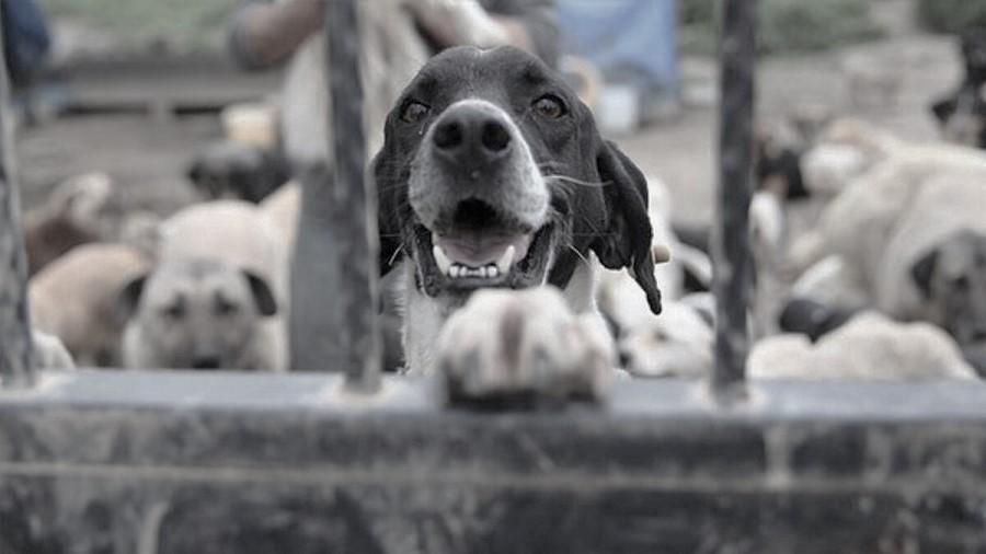 CHP'den Meclis'e hayvan hakları için 4 farklı yasa teklifi