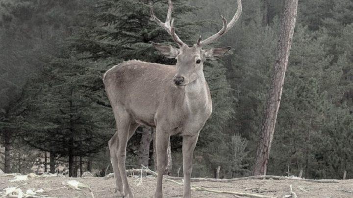 230 STK'dan ortak çağrı: Avcılık yasaklansın !