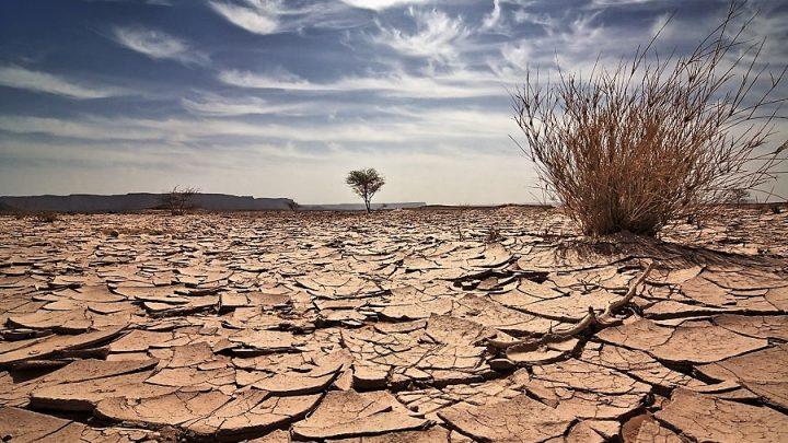 NASA'dan sonra WWF'den Türkiye'ye uyarı: Kuraklık kritik seviyeyi geçti!